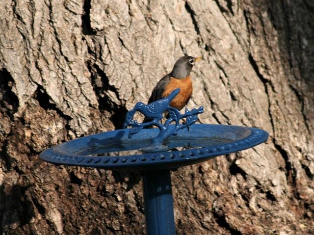 robin at bath