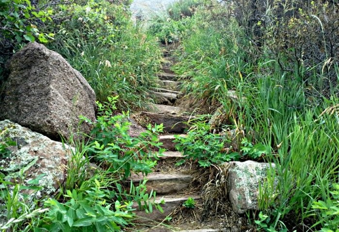 steps-in-life