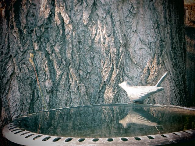 reflection in birdbath