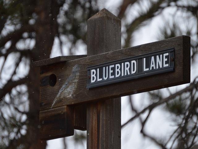 bluebird lane