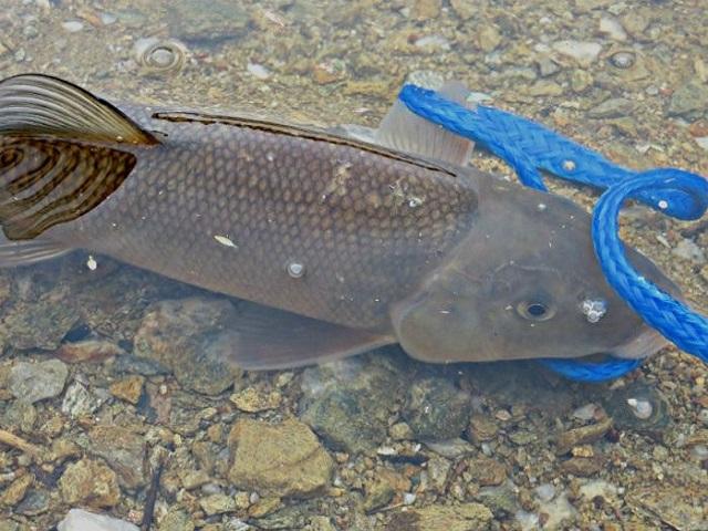 lil-fishy
