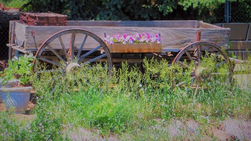 beauty-wagon (2)