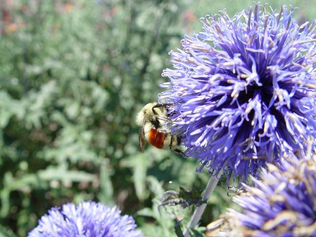 pollinator garden 2