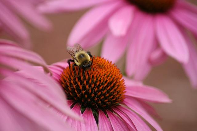 downsized bumblebee on conehead