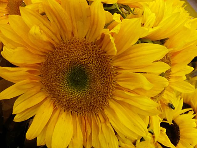 smile-sunflower