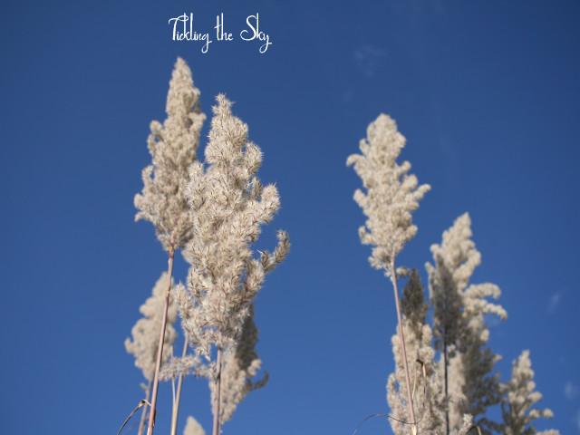 Tickling the Sky