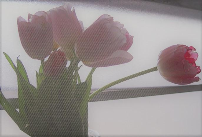 Tulip-1 - wp-ww
